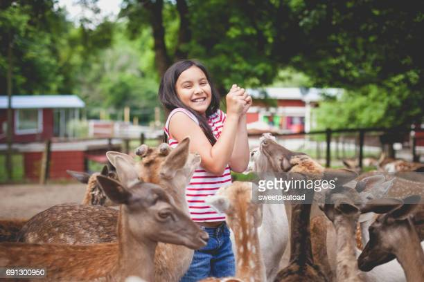 Girl at a petting zoo