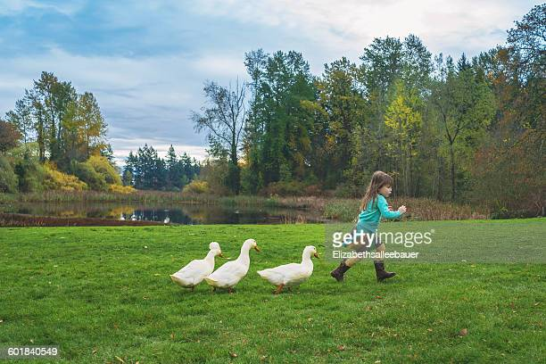 Girl being chased by three ducks