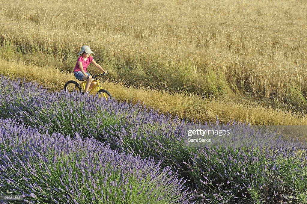 Girl biking among lavender and wheat fields : Stock Photo