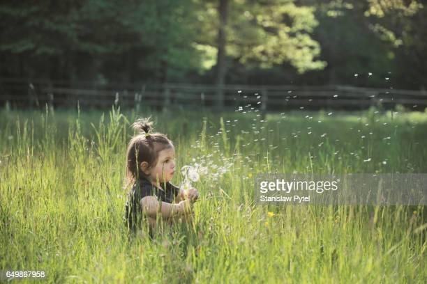 girl blowing dandelions in forest meadow - bialowieza forest stock-fotos und bilder