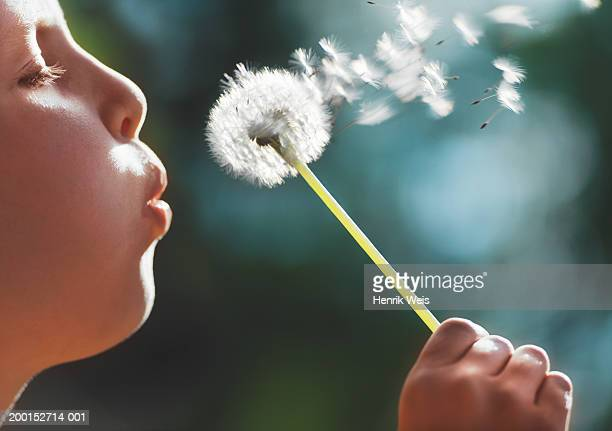 girl (8-10) blowing seeds off dandelion, close up, side view - soplar fotografías e imágenes de stock