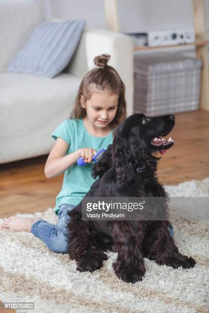 girl brushing cocker spaniel hair in living room at home - hairy girl stock pictures, royalty-free photos & images