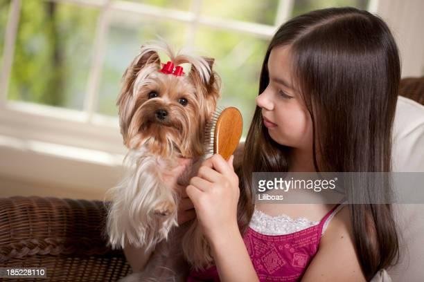Girl Brushing Her Yorkshire Terrier Dog