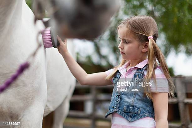 Girl brushing horses coat