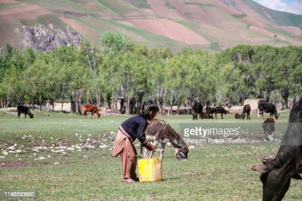 girl by domestic animals on grass against mountain - afghanistan stock pictures, royalty-free photos & images