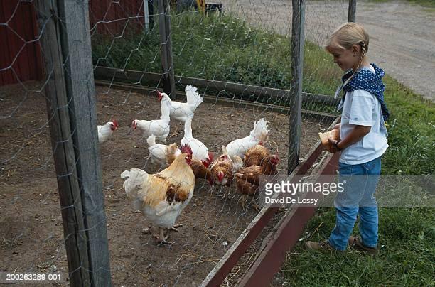 Girl by fence feeding chickens