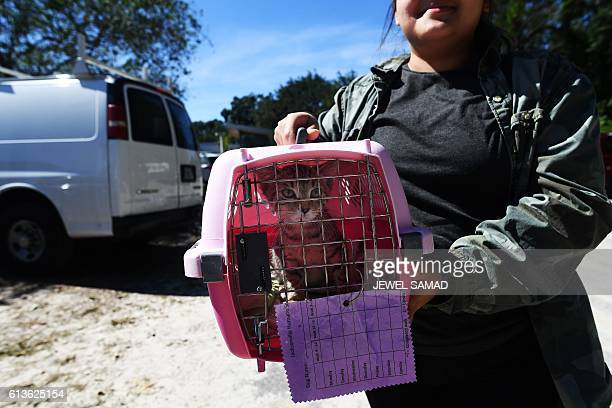 Girl carries a cat, which her family took to safety ahead of Hurricane Matthew when Jacksonville Human Society evacuated all their animals, to return...