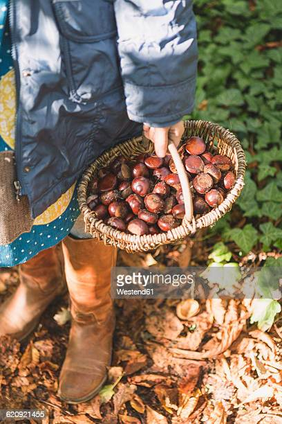 girl carrying basket with chestnuts - castanhas imagens e fotografias de stock
