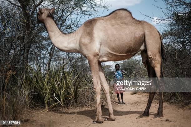TOPSHOT A girl chases a camel in Alakas village where holds antifemale genital mutilation women group PERUR bordering with Kenya northeast Uganda on...
