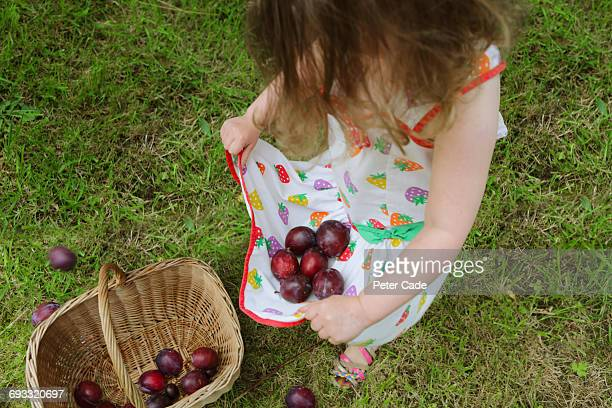 Girl collecting plums in her dress