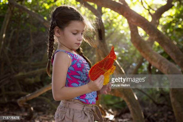 girl collecting seagrape (coccoloba uvifera) leaves, blowing rocks preserve, jupiter, florida, usa - blowing rocks preserve stock photos and pictures