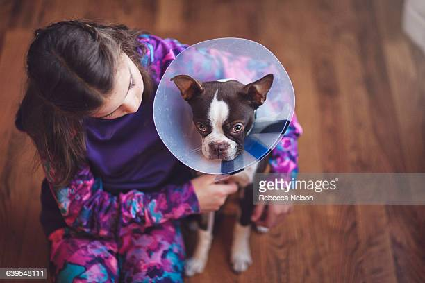Girl comforting Boston Terrier puppy wearing pet cone