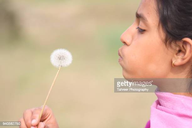 a girl dispersing dandelion seeds - feuille de pissenlit photos et images de collection