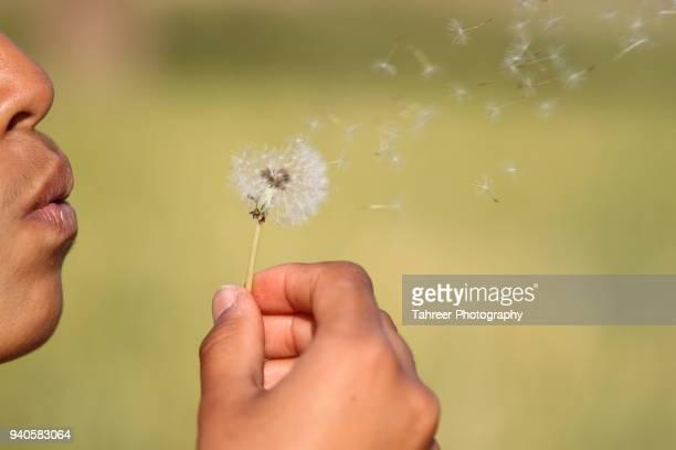 A girl dispersing dandelion seeds