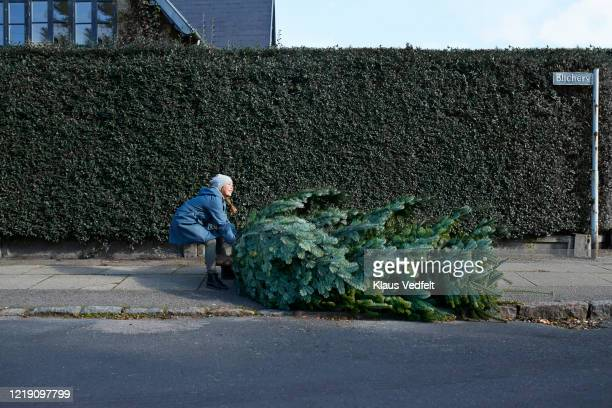 girl dragging christmas tree on sidewalk - dragging stock pictures, royalty-free photos & images