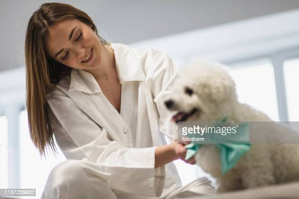 girl dressing up her dog - dog knotted in woman stock pictures, royalty-free photos & images