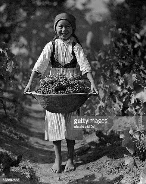 Girl during a vintage with a big bowl filled with grapes - ca. 1935- Photographer: Rudolf BaloghVintage property of ullstein bild