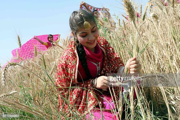 A girl during the celebration of Baisakhi Festival in a wheat field The Baisakhi is the beginning of the new season People of North India...