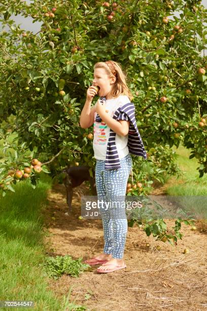 girl eating apple in apple orchard - dog eats out girl stock photos and pictures