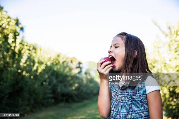 girl eating apple while standing in orchard - kid girl eating apple stock photos and pictures