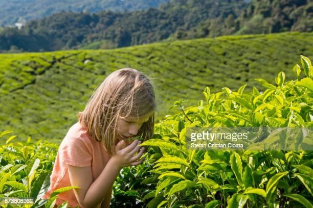 Girl enjoying a fresh tea leaf scent
