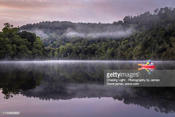 a girl enjoys a tranquil paddle in a kayak at dawn down a flat river with reflections of misty rainforest and mountain scenery - river stock pictures, royalty-free photos & images
