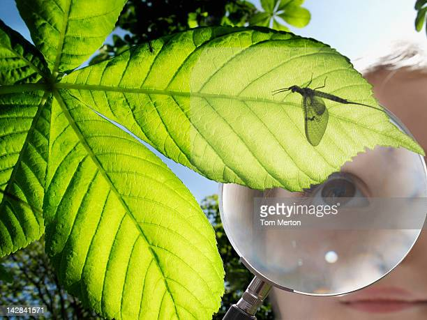 Girl examining insect through magnifying glass
