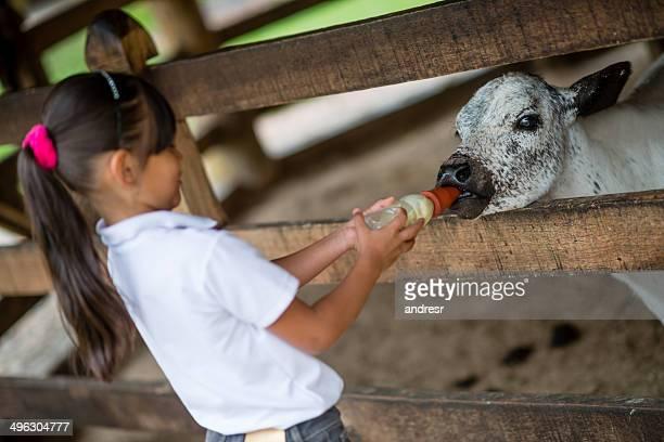 girl フィーディング、ふくらはぎ - milking farm ストックフォトと画像