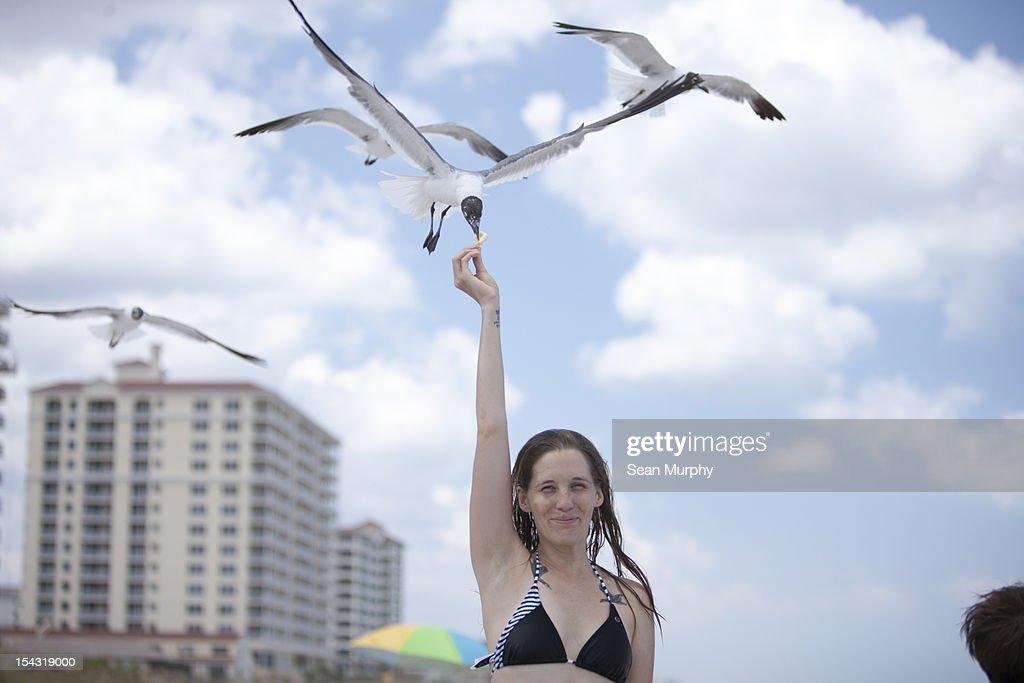 Girl feeding a sea gull on the beach : Bildbanksbilder