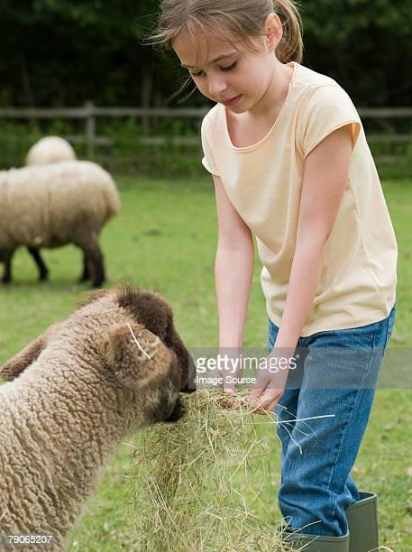 Ein Mädchen, die Fütterung ein Schaf
