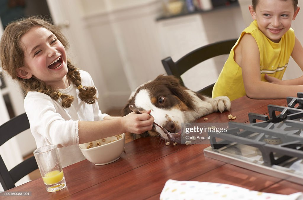 Girl (6-8) feeding dog breakfast cereal at kitchen table, laughing : Stock Photo