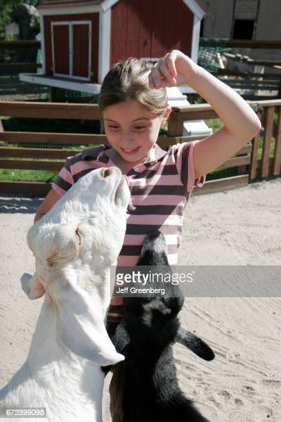 A girl feeding goats in the petting area at Washington Park Zoo