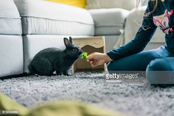 Girl feeding hare in living room