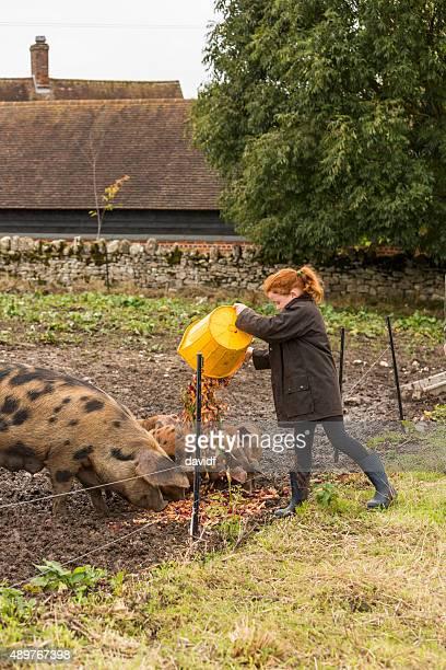 Girl la alimentación de los cerdos Scraps vegetales en una granja ecológica