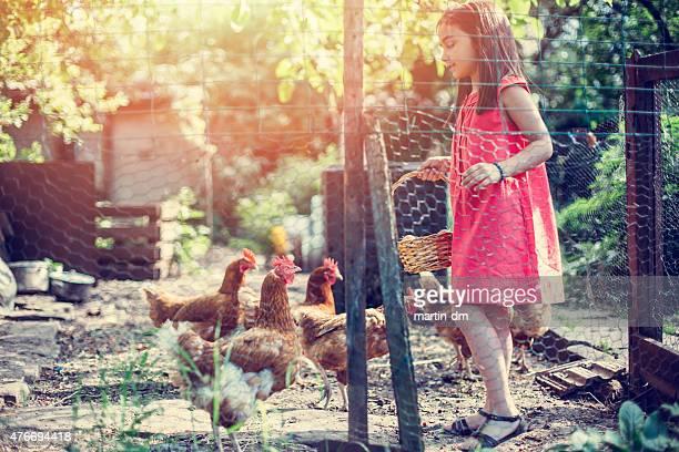 Girl feeding the hens