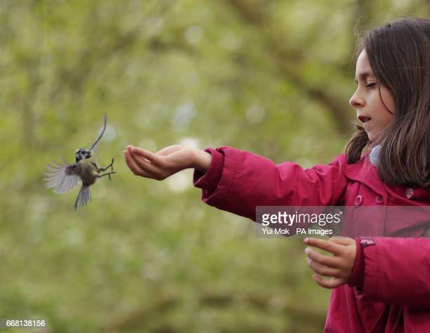 A girl feeds a blue tit in St James's Park London