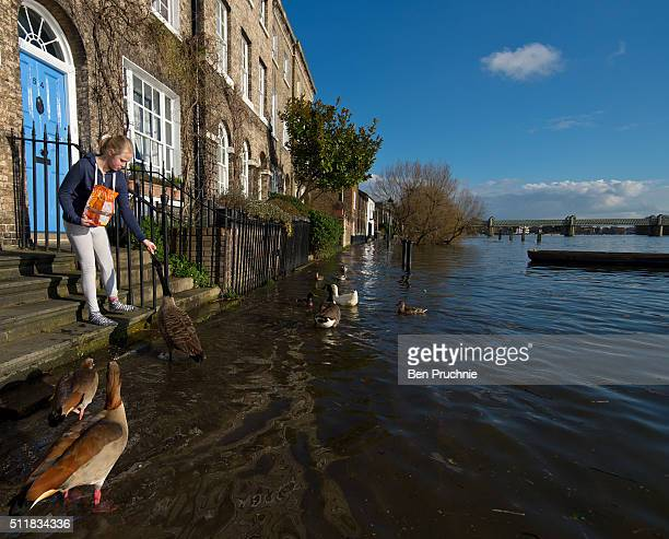 A girl feeds ducks and geese outside her home The River Thames floods Chiswick Mall on February 23 2016 in London England Todays high tide of 54...
