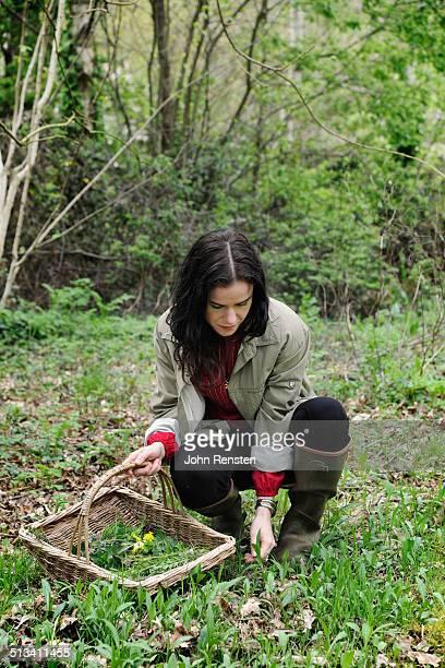 girl foraging for edible and medicinal herbs - foerageren stockfoto's en -beelden