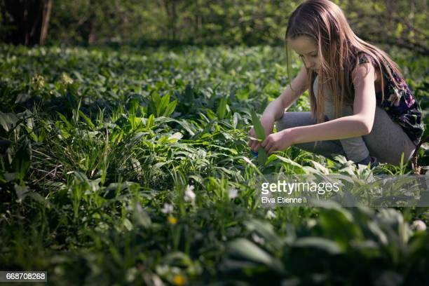 Girl foraging for wild garlic in the woods