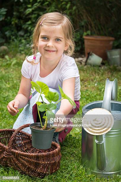 girl gardening, putting a potted plant into basket - alexandra dost stock-fotos und bilder