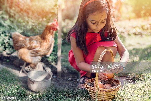 Girl gathering eggs from the coop