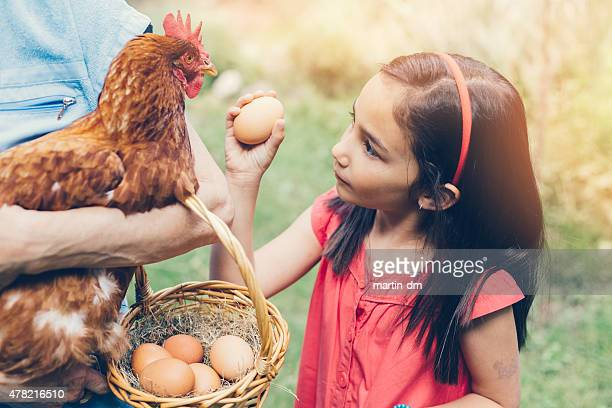 Girl gathering eggs in a basket