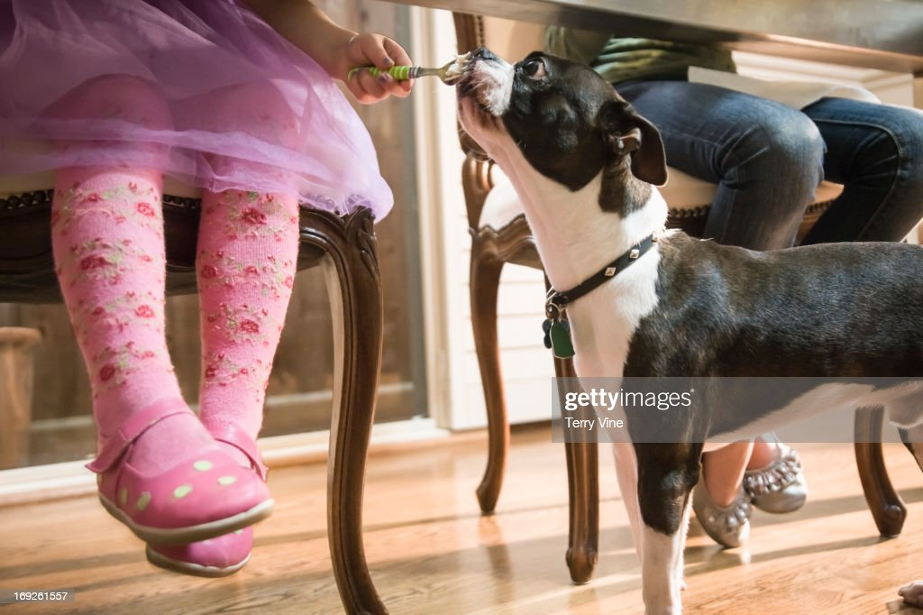 Girl giving dog food under table : Stock Photo
