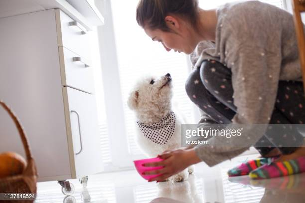 girl giving water to dog at home - pet equipment stock pictures, royalty-free photos & images