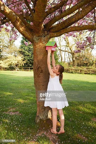 Girl hanging birdhouse in tree