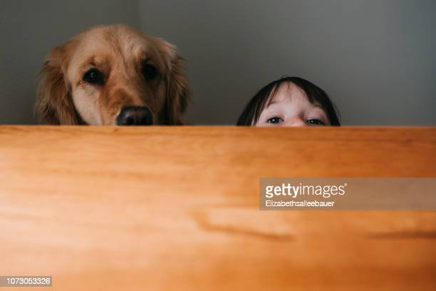 girl hiding behind a table with her dog - naughty america stock pictures, royalty-free photos & images