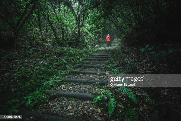 girl hiking in the laurisilva forest in madeira - isolated color stock pictures, royalty-free photos & images