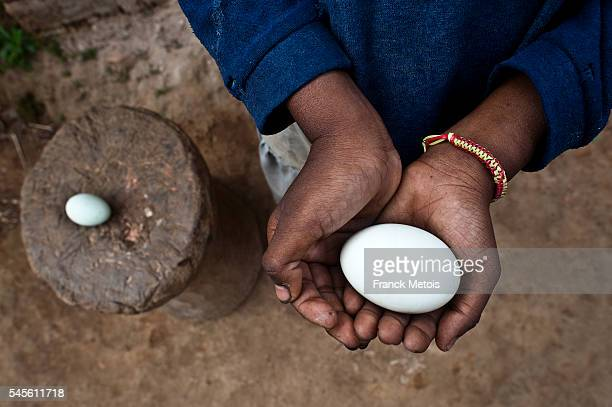 Girl holding a duck egg in her hands ( Madagascar)