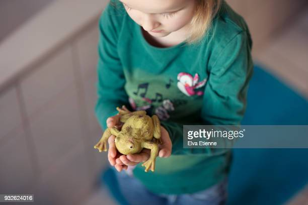 Girl (4-5) holding a toy rubber frog in her hands