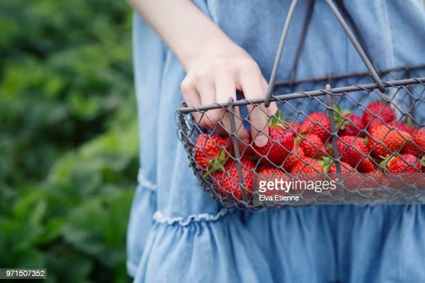 girl holding basket of freshly picked strawberries - erdbeere stock-fotos und bilder
